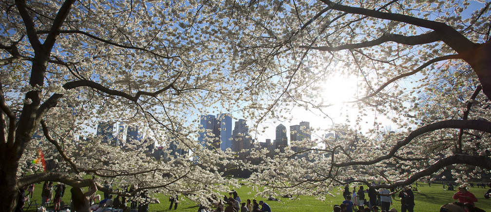 Cities are Planting more Trees to Fight Climate Change and Improve Healthy Living