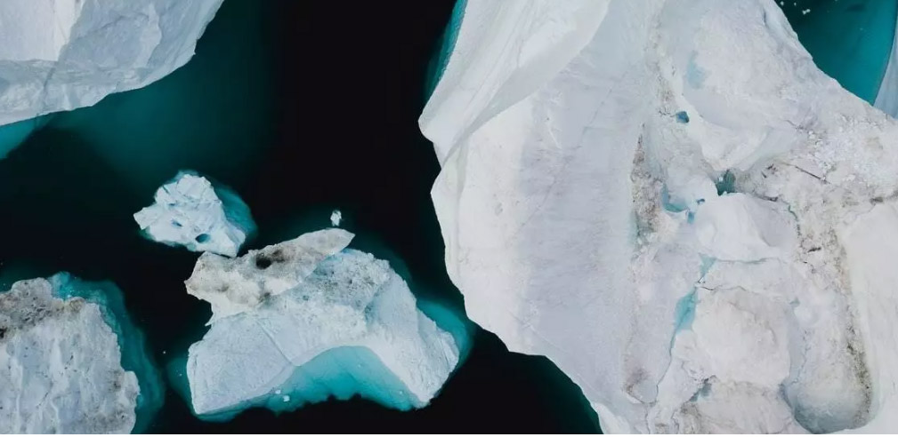 Microplastics have Been Found Inside Minute Animals Living in Antarctica