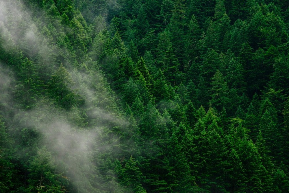 Massive Reforestation is Key to Averting a Climate Catastrophe