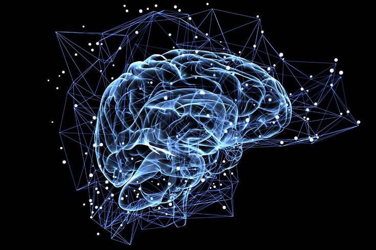Understand the Brain